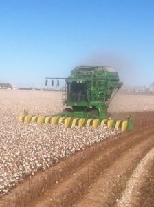 Harvesting. jpeg