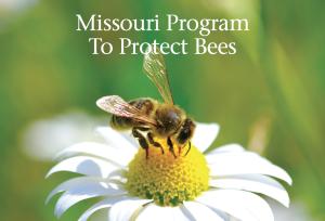 missouri program to protect bees