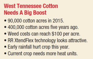 West Tennesee Cotton