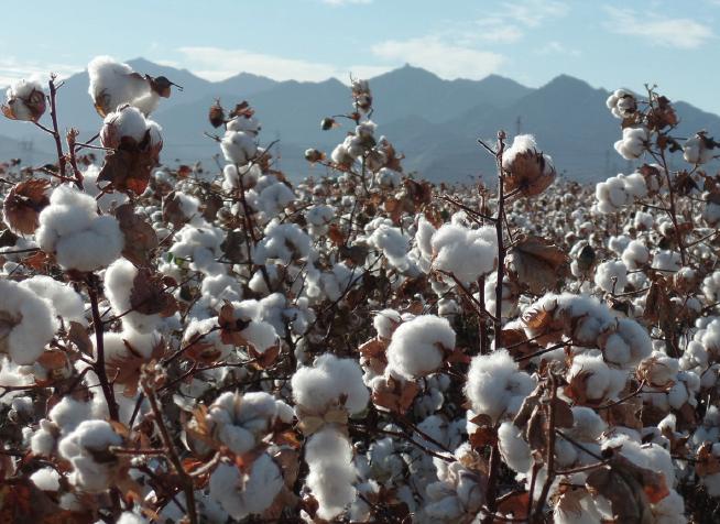 western cotton