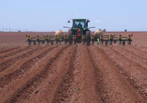 Planting Cotton
