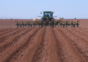 planting-cotton