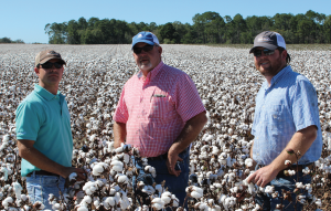 Doerun, Ga., cotton farmer Bart Davis, center, pictured with his son Jedd, right, and Deltapine district sales manager, Jason Pittman, says his DP 1555 B2RF yielded extremely well in 2015.