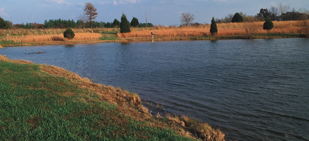 Among the projects that CRP will provide cost-share funding is wildlife habitat development, such as offered at this Missouri pond.