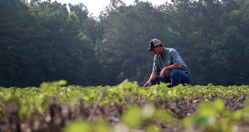 Virginia producer Mike Griffin says the Enlist system exceeds his expectations for crop tolerance and weed control.