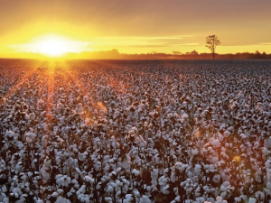 The NCC will continue to help improve cotton producers' safety net and overall economic position.