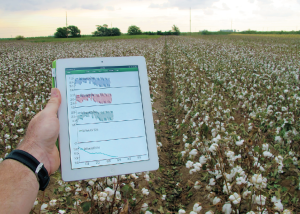 Access to the Focus on Cotton webcasts, which feature reports from noted cotton industry experts, is available 24 hours a day.