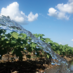 Irrigation Strategies for cotton