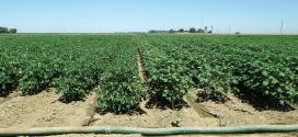 Irrigation Strategies – Part 2