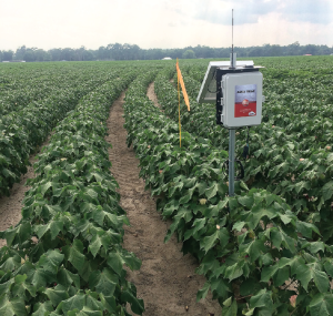 Soil moisture data can be accessed 24/7 through the wireless cellular network.