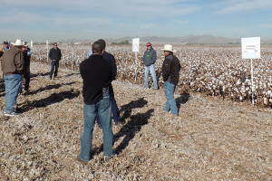 A University of Arizona Tent Talk was held at the site of an advance strains test plot in Buckeye, Ariz., supported by SSP funding. Bayer's Tony Salcido, far right, and Monsanto's Paul Sawyer, to Salcido's right, participated in the discussion.