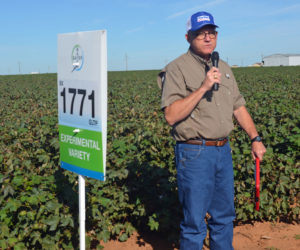 Kenny Melton, Western region agronomic manager, shows off the experimental BX 1771GLTP, an advanced line with improved insect control as well as glyphosate and glufosinate tolerance.