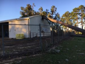 Fallen trees caused considerable structural damage to buildings and power lines. Image Credit: Bruce Martin / Clemson University
