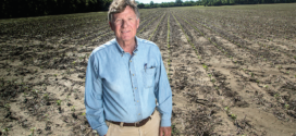 Cotton Producers Have Renewed Faith