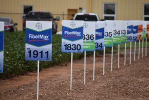 Five New Bayer Varieties Focus On High Yields