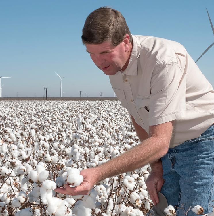 Rolling Plains Cotton — 2017
