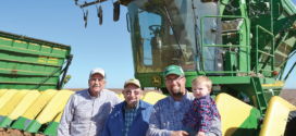 Deltapine Cotton Shows Strong Yield, Quality Potential In West Texas