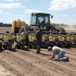 planting cotton seed