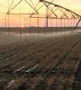 LEPA irrigation
