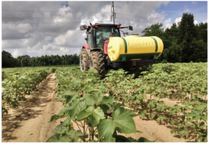 in-field variability and cotton yields