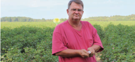 Deltapine® Cotton Finishes Strong In Alabama