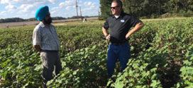 Researchers Look At Enhanced-Efficiency Nitrogen Fertilizers