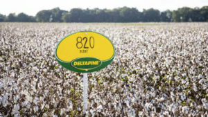 deltapine NPE evaluations