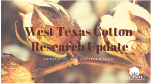 West Texas Cotton Research Update