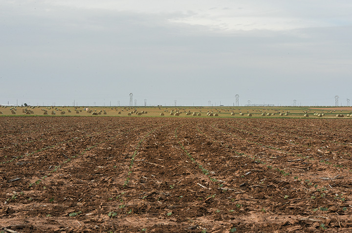 cotton and hay on the McLain Farms