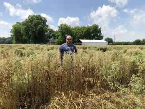 Adam Chappell cover crops