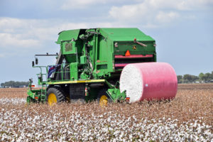 cotton harvest, matagorda county, texas