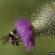 Seven ag groups file lawsuit regarding bumblebee species