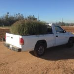new hybrid tumbleweed
