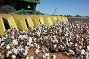 Texas High Plains cotton harvest