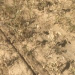 paraquat activity on weeds