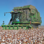 california cotton harvest