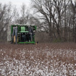 picking cotton near Scott, Ark.
