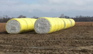 round bales, forrest city, arkansas