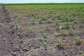 Disaster relief authorized for producers affected by extreme drought