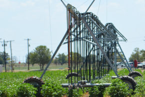 New app development could aid crop irrigation management