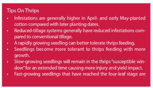 thrips tips