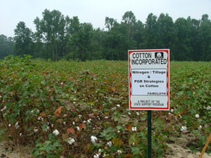 cotton inc research