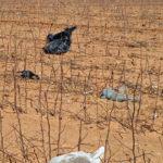plastic trash in fields
