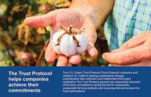 cotton protocol