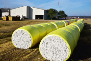 louisiana cotton bales