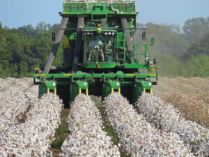 harvesting 60-inch rows