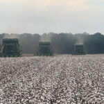 arkansas cotton harvest