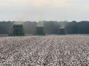 arkansas cotton harvest
