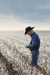 cowboy in cotton