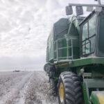 snow on texas cotton
